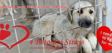 Stichting Heart 4 Botosani Strays